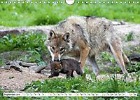 Mit dem Wolf durch's Jahr (Wandkalender 2019 DIN A4 quer) - Produktdetailbild 9
