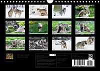 Mit dem Wolf durch's Jahr (Wandkalender 2019 DIN A4 quer) - Produktdetailbild 13