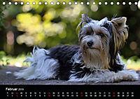 Mit dem Yorki durch das Jahr 2019 (Tischkalender 2019 DIN A5 quer) - Produktdetailbild 2