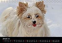 Mit dem Yorki durch das Jahr 2019 (Tischkalender 2019 DIN A5 quer) - Produktdetailbild 1