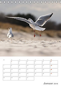 Möwen - die Vögel der Küste (Tischkalender 2019 DIN A5 hoch) - Produktdetailbild 1