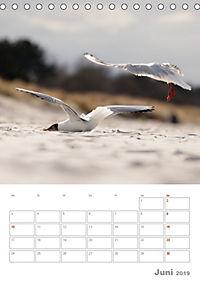 Möwen - die Vögel der Küste (Tischkalender 2019 DIN A5 hoch) - Produktdetailbild 6