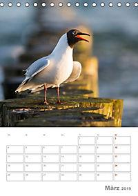 Möwen - die Vögel der Küste (Tischkalender 2019 DIN A5 hoch) - Produktdetailbild 3