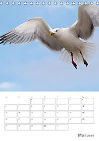 Möwen - die Vögel der Küste (Tischkalender 2019 DIN A5 hoch) - Produktdetailbild 5
