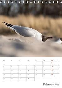 Möwen - die Vögel der Küste (Tischkalender 2019 DIN A5 hoch) - Produktdetailbild 2