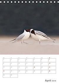 Möwen - die Vögel der Küste (Tischkalender 2019 DIN A5 hoch) - Produktdetailbild 4