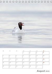 Möwen - die Vögel der Küste (Tischkalender 2019 DIN A5 hoch) - Produktdetailbild 8
