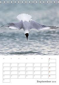 Möwen - die Vögel der Küste (Tischkalender 2019 DIN A5 hoch) - Produktdetailbild 9