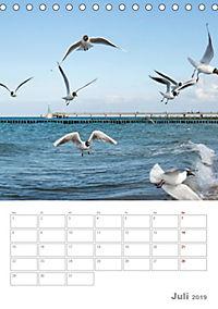 Möwen - die Vögel der Küste (Tischkalender 2019 DIN A5 hoch) - Produktdetailbild 7