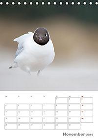 Möwen - die Vögel der Küste (Tischkalender 2019 DIN A5 hoch) - Produktdetailbild 11