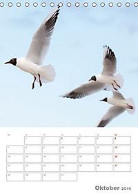 Möwen - die Vögel der Küste (Tischkalender 2019 DIN A5 hoch) - Produktdetailbild 10