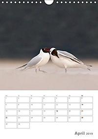 Möwen - die Vögel der Küste (Wandkalender 2019 DIN A4 hoch) - Produktdetailbild 4