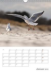 Möwen - die Vögel der Küste (Wandkalender 2019 DIN A4 hoch) - Produktdetailbild 1