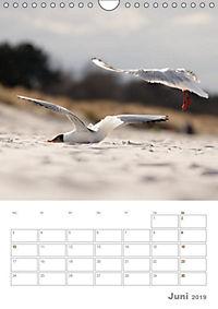 Möwen - die Vögel der Küste (Wandkalender 2019 DIN A4 hoch) - Produktdetailbild 6