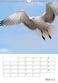 Möwen - die Vögel der Küste (Wandkalender 2019 DIN A4 hoch) - Produktdetailbild 5
