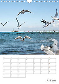 Möwen - die Vögel der Küste (Wandkalender 2019 DIN A4 hoch) - Produktdetailbild 7