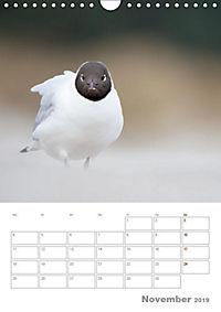 Möwen - die Vögel der Küste (Wandkalender 2019 DIN A4 hoch) - Produktdetailbild 11