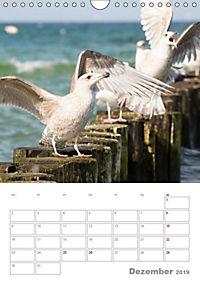 Möwen - die Vögel der Küste (Wandkalender 2019 DIN A4 hoch) - Produktdetailbild 12