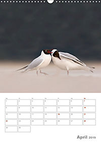 Möwen - die Vögel der Küste (Wandkalender 2019 DIN A3 hoch) - Produktdetailbild 4