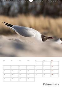 Möwen - die Vögel der Küste (Wandkalender 2019 DIN A3 hoch) - Produktdetailbild 2