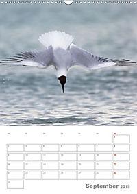 Möwen - die Vögel der Küste (Wandkalender 2019 DIN A3 hoch) - Produktdetailbild 9