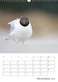Möwen - die Vögel der Küste (Wandkalender 2019 DIN A3 hoch) - Produktdetailbild 11