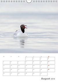 Möwen - die Vögel der Küste (Wandkalender 2019 DIN A4 hoch) - Produktdetailbild 8