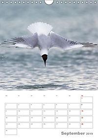 Möwen - die Vögel der Küste (Wandkalender 2019 DIN A4 hoch) - Produktdetailbild 9