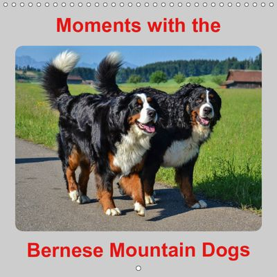 Moments with the Bernese Mountain Dogs (Wall Calendar 2019 300 × 300 mm Square), Hubert Hunscheidt