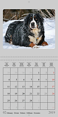 Moments with the Bernese Mountain Dogs (Wall Calendar 2019 300 × 300 mm Square) - Produktdetailbild 2