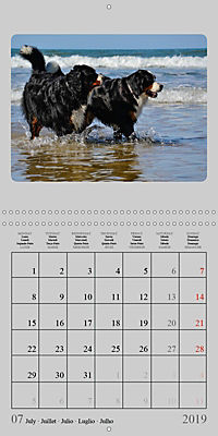 Moments with the Bernese Mountain Dogs (Wall Calendar 2019 300 × 300 mm Square) - Produktdetailbild 7