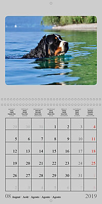 Moments with the Bernese Mountain Dogs (Wall Calendar 2019 300 × 300 mm Square) - Produktdetailbild 8