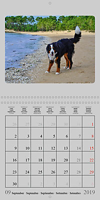 Moments with the Bernese Mountain Dogs (Wall Calendar 2019 300 × 300 mm Square) - Produktdetailbild 9