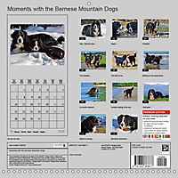 Moments with the Bernese Mountain Dogs (Wall Calendar 2019 300 × 300 mm Square) - Produktdetailbild 13