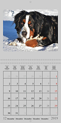 Moments with the Bernese Mountain Dogs (Wall Calendar 2019 300 × 300 mm Square) - Produktdetailbild 12