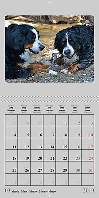 Moments with the Bernese Mountain Dogs (Wall Calendar 2019 300 × 300 mm Square) - Produktdetailbild 3