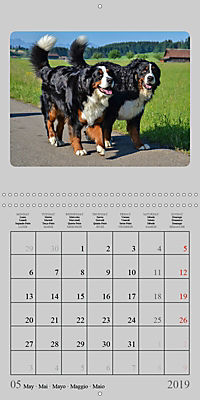 Moments with the Bernese Mountain Dogs (Wall Calendar 2019 300 × 300 mm Square) - Produktdetailbild 5