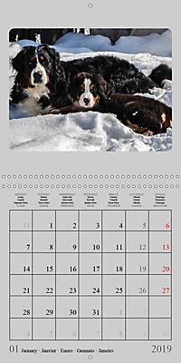Moments with the Bernese Mountain Dogs (Wall Calendar 2019 300 × 300 mm Square) - Produktdetailbild 1