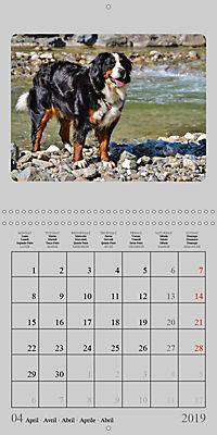 Moments with the Bernese Mountain Dogs (Wall Calendar 2019 300 × 300 mm Square) - Produktdetailbild 4