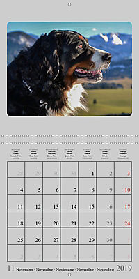 Moments with the Bernese Mountain Dogs (Wall Calendar 2019 300 × 300 mm Square) - Produktdetailbild 11