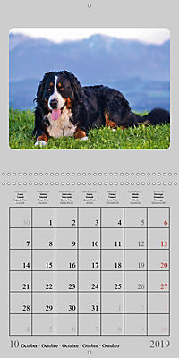 Moments with the Bernese Mountain Dogs (Wall Calendar 2019 300 × 300 mm Square) - Produktdetailbild 10