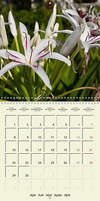 most beautiful plants of Hawai'i (Wall Calendar 2019 300 × 300 mm Square) - Produktdetailbild 4