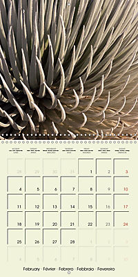 most beautiful plants of Hawai'i (Wall Calendar 2019 300 × 300 mm Square) - Produktdetailbild 2