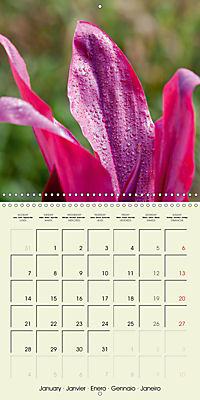 most beautiful plants of Hawai'i (Wall Calendar 2019 300 × 300 mm Square) - Produktdetailbild 1