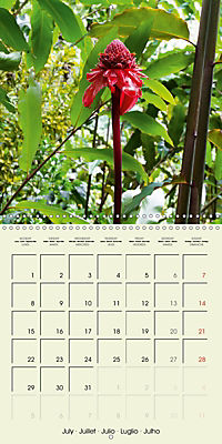 most beautiful plants of Hawai'i (Wall Calendar 2019 300 × 300 mm Square) - Produktdetailbild 7