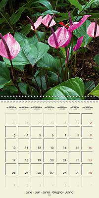 most beautiful plants of Hawai'i (Wall Calendar 2019 300 × 300 mm Square) - Produktdetailbild 6