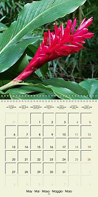 most beautiful plants of Hawai'i (Wall Calendar 2019 300 × 300 mm Square) - Produktdetailbild 5