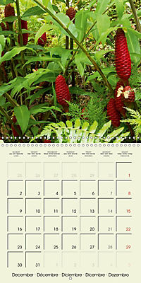 most beautiful plants of Hawai'i (Wall Calendar 2019 300 × 300 mm Square) - Produktdetailbild 12