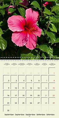 most beautiful plants of Hawai'i (Wall Calendar 2019 300 × 300 mm Square) - Produktdetailbild 9
