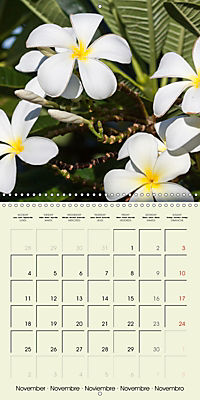 most beautiful plants of Hawai'i (Wall Calendar 2019 300 × 300 mm Square) - Produktdetailbild 11